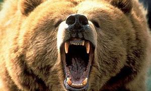 angry bear is angry