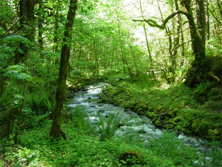 camping creek